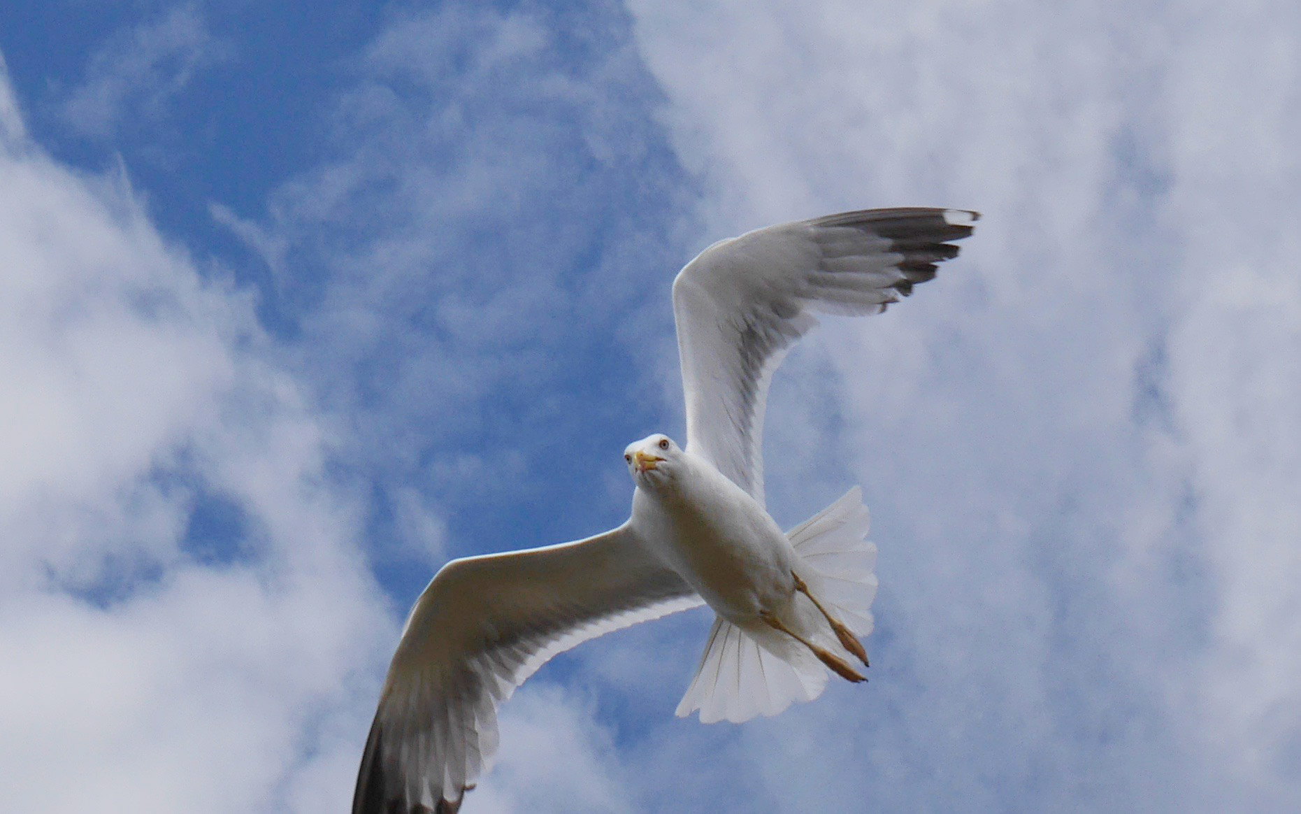 un oiseau qui vole comme un parapente en ardeche